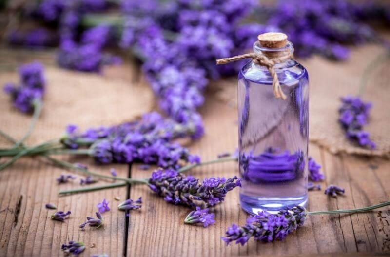 tinh dau hoa oai huong lavender